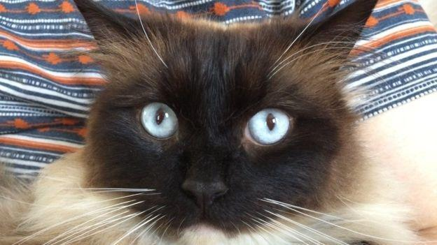 Super recognisers step in to snare cat killer after Met's 'ludicrous' outcome